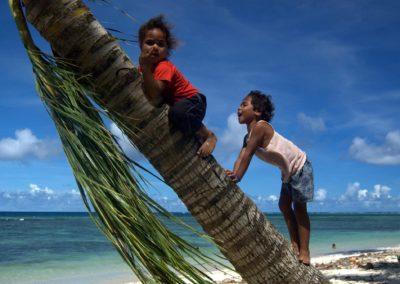 Local kids on a coconut Palm, Fiji
