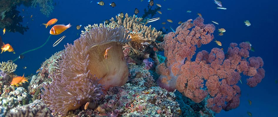 The Soft Coral Capital of The World, Taveuni, Fiji Islands (5)