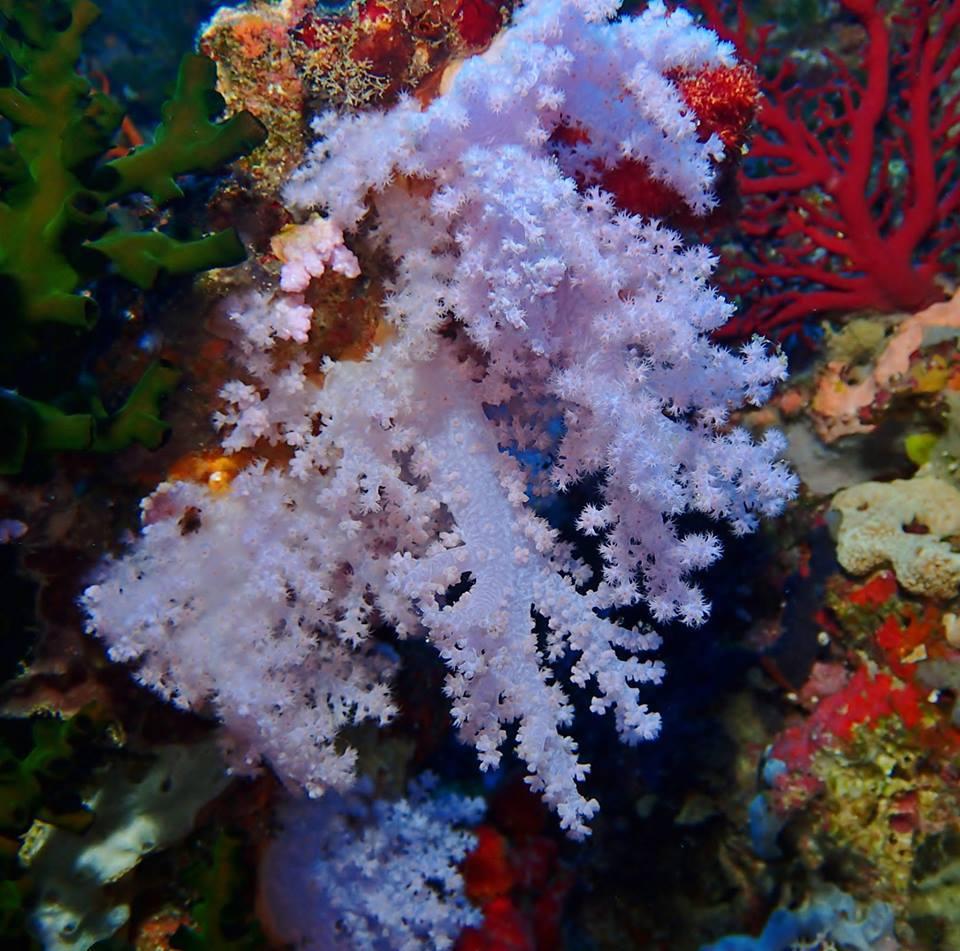 The Soft Coral Capital of The World, Taveuni, Fiji Islands (4)