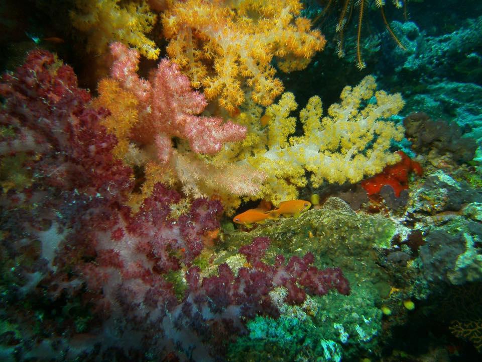 The Soft Coral Capital of The World, Taveuni, Fiji Islands (2)