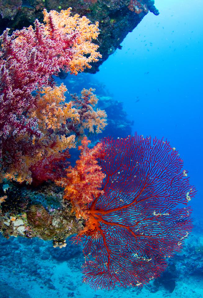 The Soft Coral Capital of The World, Taveuni, Fiji Islands (2)