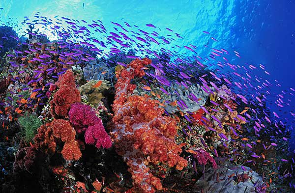 Diving the Rainbow Reef, Taveuni, Fiji Islands