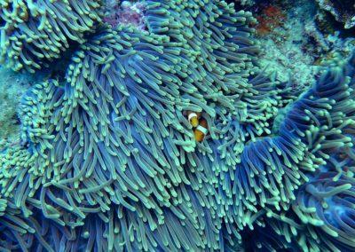 Diving The Rainbow Reef, Taveuni, Fiji (01)
