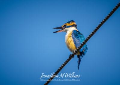 Bird Watching in Fiji (14)
